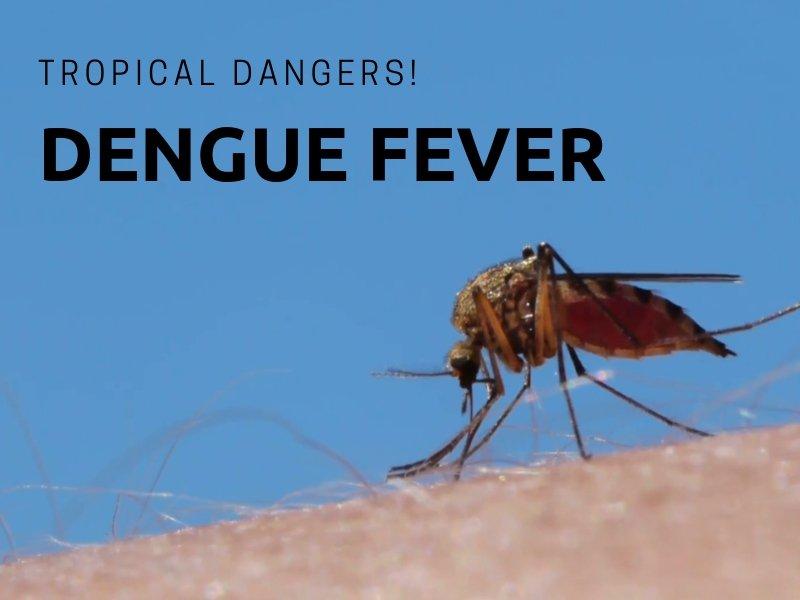 Dengue fever on Koh Chang